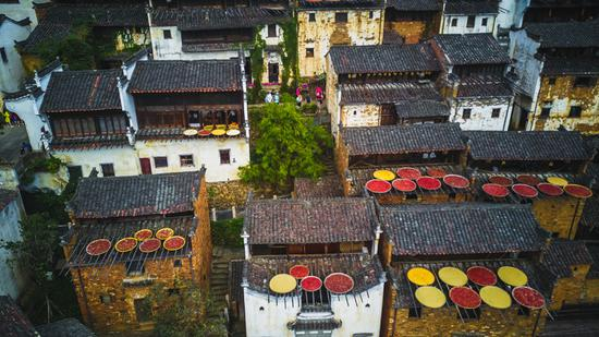 Wuyuan in East China glows with autumn harvest